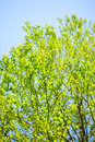 Summer fresh green leaves japan Royalty Free Stock Image