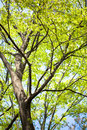 Summer fresh green leaves in spring Stock Image
