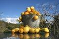 Summer fruit bucket Stock Images