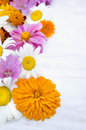 Summer garden flowers on white wooden background outdoor Stock Images