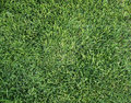 Green grass background texture lawn greenery plain plant soccer golf natural fresh park pattern surface abstract field wallpaper Royalty Free Stock Photo