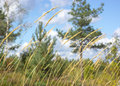 Summer grass swaying in the wind natural forest Stock Photography