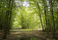 Summer in a green forest with leaves and sunshine Royalty Free Stock Photos