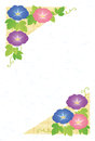 Summer greeting card of morning glories Royalty Free Stock Image