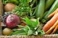 Summer harvest basket of farmers vegetables and garden herbs Stock Image