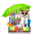 Summer holiday dog vacation in bag full of items Stock Photography