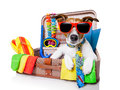 Summer holiday dog vacation in bag full of items Royalty Free Stock Photography