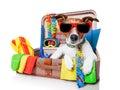 Fiesta perro