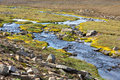 Summer iceland landscape small winding river stream horizontal shot Stock Photos