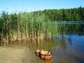 Summer idyl near the lake Royalty Free Stock Photo
