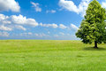 Summer landscape big tree on a green grass hill Royalty Free Stock Photography