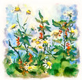 Summer landscape with daisies and currant flower watercolor painting bush Stock Images