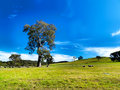Summer landscape farm Royalty Free Stock Images