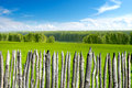 Summer landscape with fence Stock Image