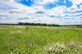 Summer landscape with a field, blue sky and white clouds Royalty Free Stock Photo