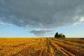 Summer landscape with field sky with clouds in august Royalty Free Stock Images