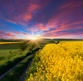 Summer landscape field yellow flowers sunrise Royalty Free Stock Image