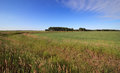 Summer landscape with green field and blue sky omsk region russia Stock Images