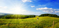 Summer landscape with green grass and cow. Royalty Free Stock Photo