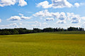 Summer landscape with green grass forest and clouds blue sky Royalty Free Stock Photos