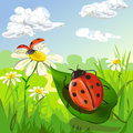 Summer landscape with ladybug beautiful a vector illustration Royalty Free Stock Photography