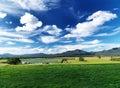 Summer landscape lake Stock Images