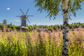 Summer landscape with a mill and birch Royalty Free Stock Photo