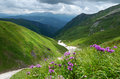 Summer landscape in the mountains with pink flowers Royalty Free Stock Photo