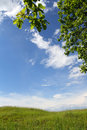 Summer landscape with oak branch Royalty Free Stock Photo
