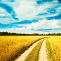 Summer Landscape with Oat Field and Country Road Royalty Free Stock Photo