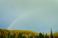 Summer landscape with rainbow over the pine forest beautiful Stock Image