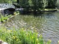 Bridge over the shining  pond  with iris flowers, pines  in  park in  Kotka, Finland Royalty Free Stock Photo