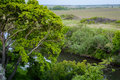 Summer landscape with tree and small river in Rostov region Royalty Free Stock Photo