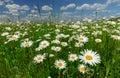 Summer Landscape With White Da...