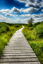 Summer landscape with wooden walkway beautiful Royalty Free Stock Images