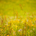 Summer lawn sunny detail background Royalty Free Stock Photo