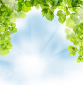 Summer leaves on greenery background floral Stock Photography