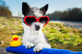 Summer love dog with heart sunglasses on a vacation day Stock Photo