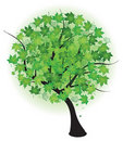 Summer maple green tree. Vector illustration. Stock Photos
