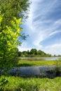 Summer Marsh Scene Stock Images
