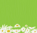 Summer meadow background with white daisy flowers Royalty Free Stock Photo