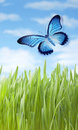 Summer meadow butterfly a flying through a grass Royalty Free Stock Image