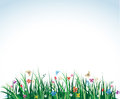 Summer meadow long grass flowers butterflies Royalty Free Stock Images