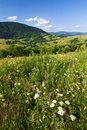 Summer meadow and mountain landscape Royalty Free Stock Photography