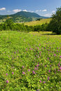 Summer meadow and mountain landscape Stock Photography