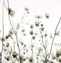 Summer meadow silhouettes art background Royalty Free Stock Photo