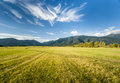 Summer meadows in sunny afternoon Stock Image
