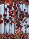 Summer meets fall