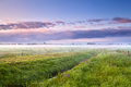 Summer misty morning sunrise over meadows drenthe Stock Images
