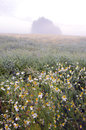 Summer morning mist on the rapes field Stock Photos